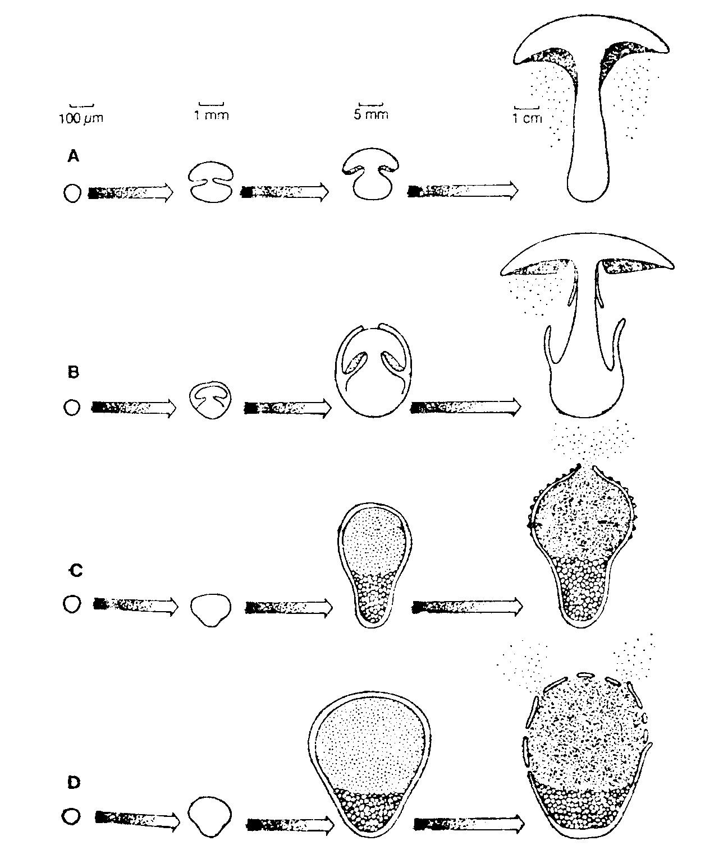 egy gombás paraziták csoportja